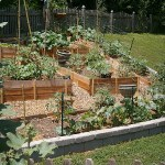 Spacing Plants in Our Organic Family Garden