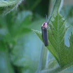 Garden Pests and Tomato Tests