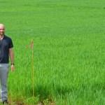 University Researchers Growing Organic Wheat in Southeast