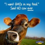 All Stirred Up about Yogurt and GMOs