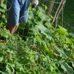Family Organic Garden Maintenance