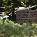 Rocky Mountain Alpine Tundra Wildflowers