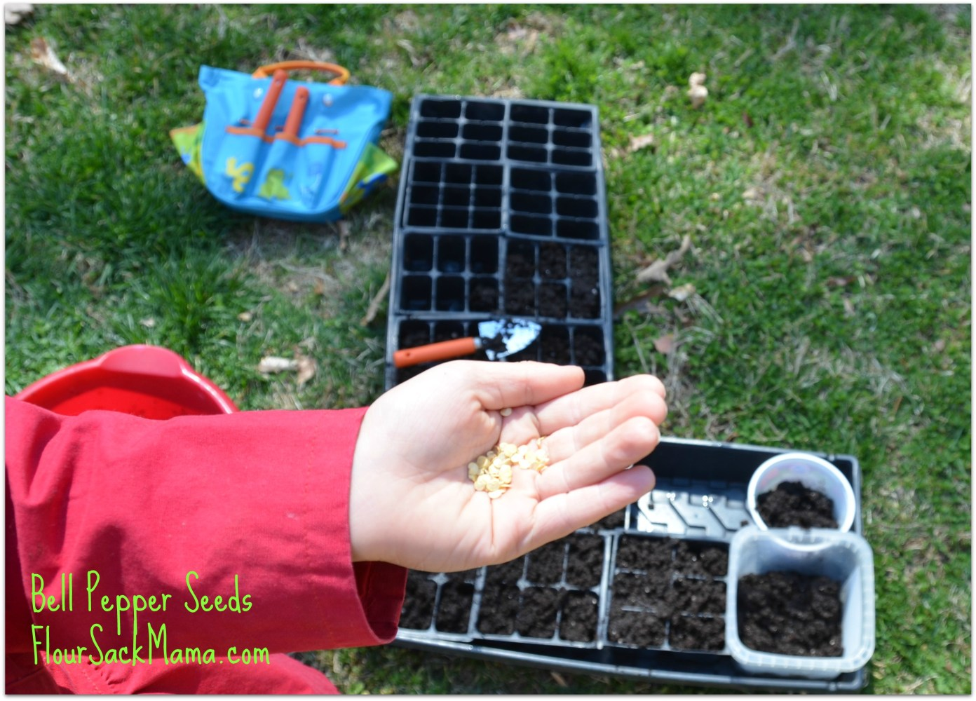 seeds in hand, seed starting tools