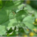 Saturdays in the Garden:  Tiny Insect Inhabitants & Organic Care for the Ecosystem