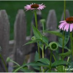 3 Reminders for Enjoying Summer Outdoors in Your Own Backyard