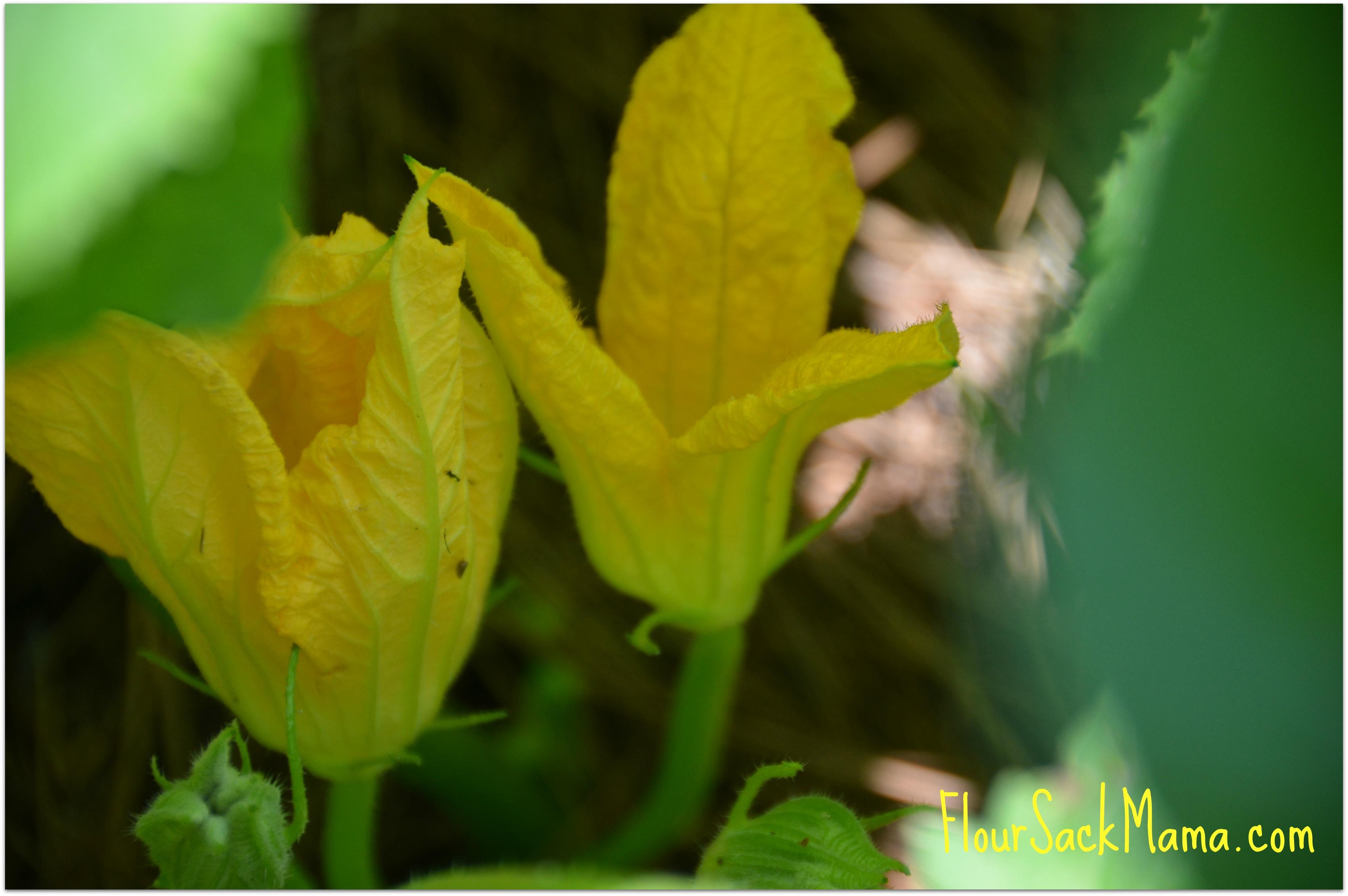 Squash Blooms Organic Garden Flour Sack Mama