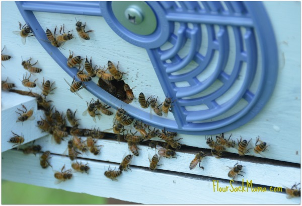 bees outside hive