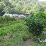 Certified Naturally Grown Farms Helped by Knoxville Restaurant Event