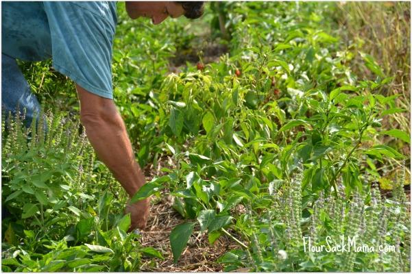 Volunteer Weeding Beardsley Farm