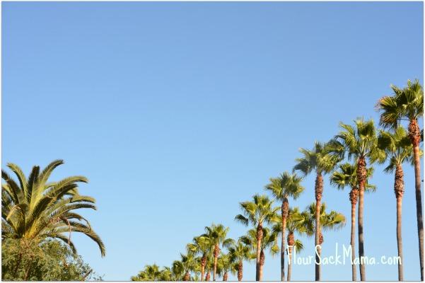 Palm Trees LA ShiftCon