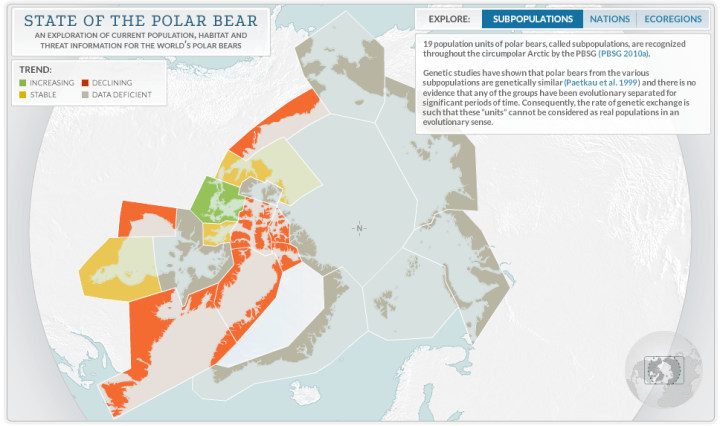 State of the polar bear