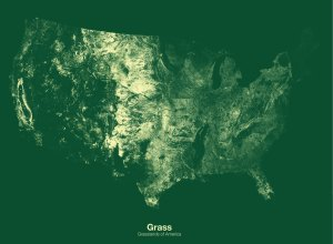 Grass minimal map