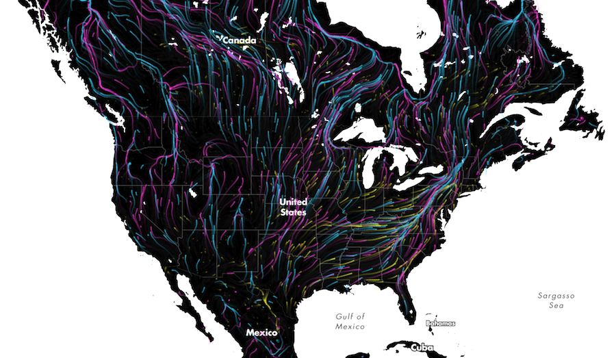 Animal migrations in animated map