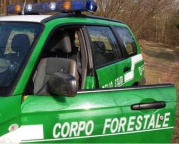 corpo-forestale