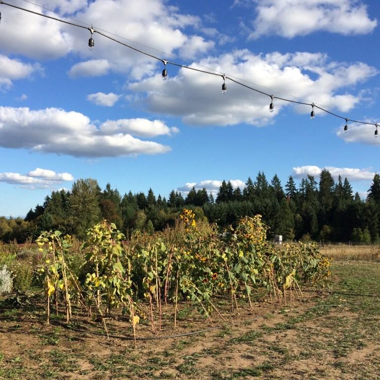 Oregon's Mt. Hood Territory Photo Tour: Day 3