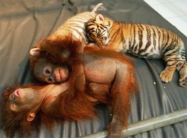 amor animal espacio para todos