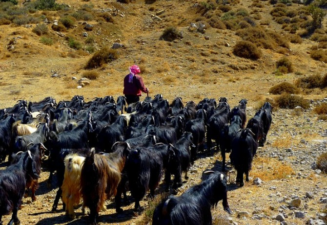 Meet the shepherd and go for a soft hike with him and the herd