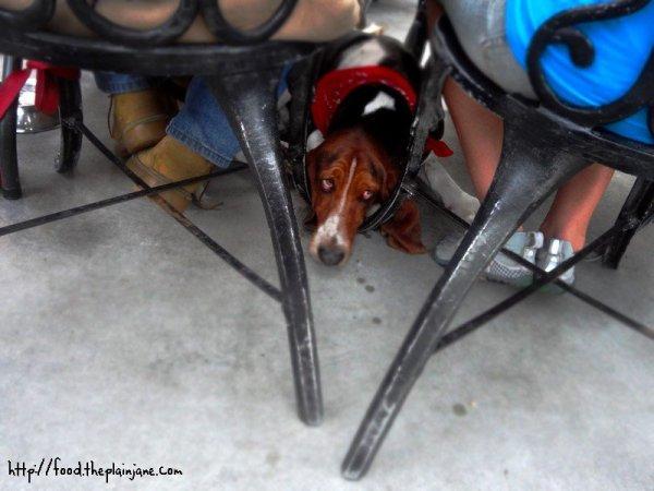 hound-dog-patio