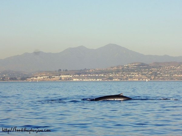 thin-whale-little-fin