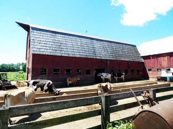 dairy-farm-barn-cook-farm