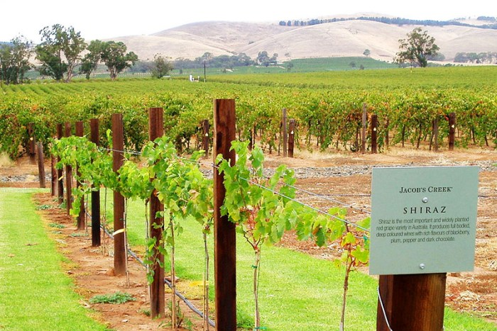 Jacob's Creek Shiraz vineyard