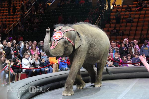 circus-6