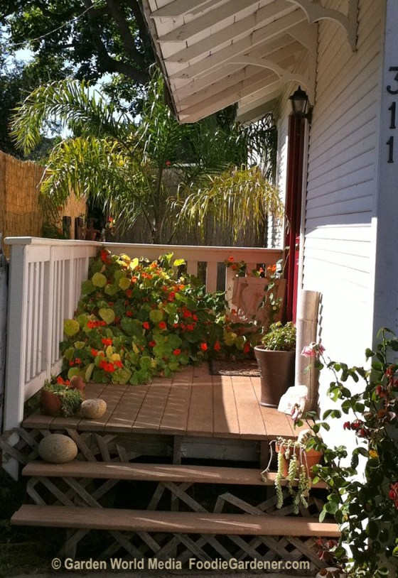 Door leading to the outdoor kitchen area foodie gardener
