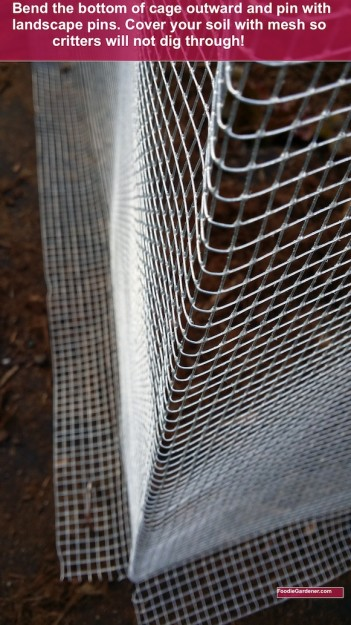 bottom of garden mesh plant protection cage