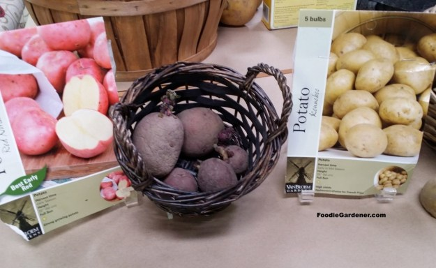 Certified Red Potatoes Kennebee Potato Seeds foodie gardener