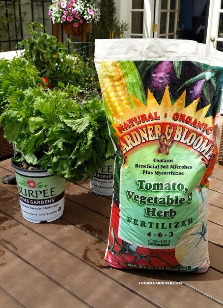 Grow a container vegetable garden on your patio tips - When to fertilize vegetable garden ...