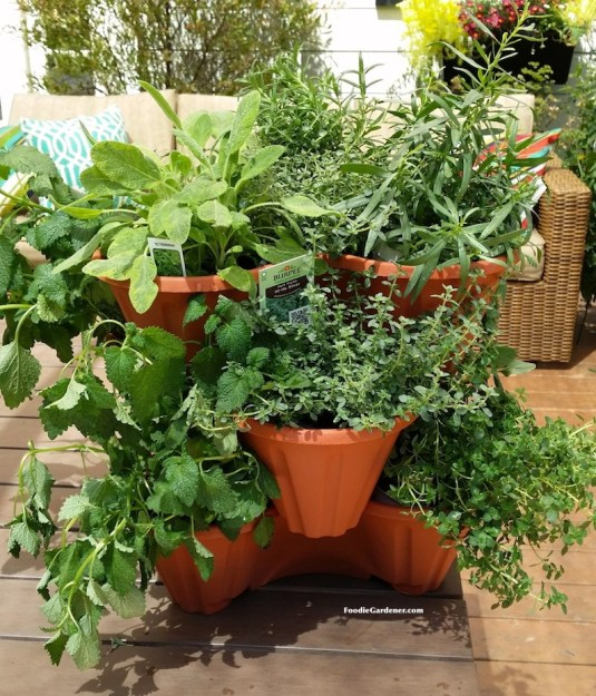 stackable planters filled with burpee home garden herbs foodie gardener