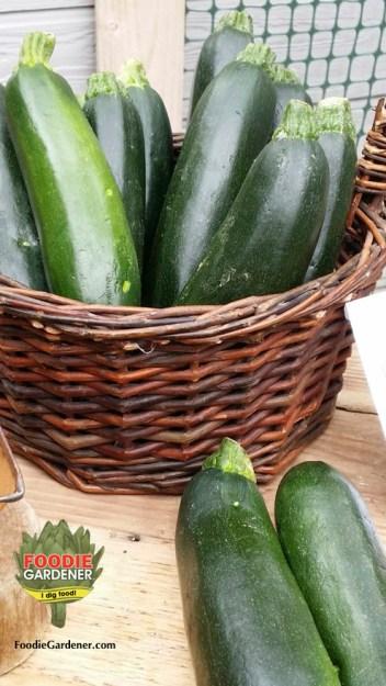 organic-zucchini-melissas-produce-in-basket-foodie-gardener-blog