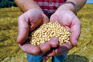 A Biotech Backlash? Farmers beginning to question the GMO path