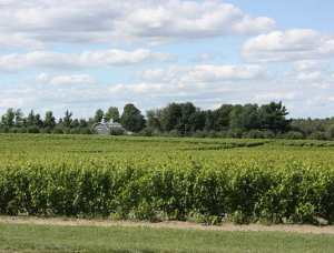 The L'Orpailleur Winery Fields