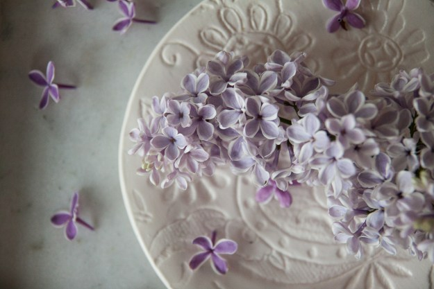 lilac for blog-1