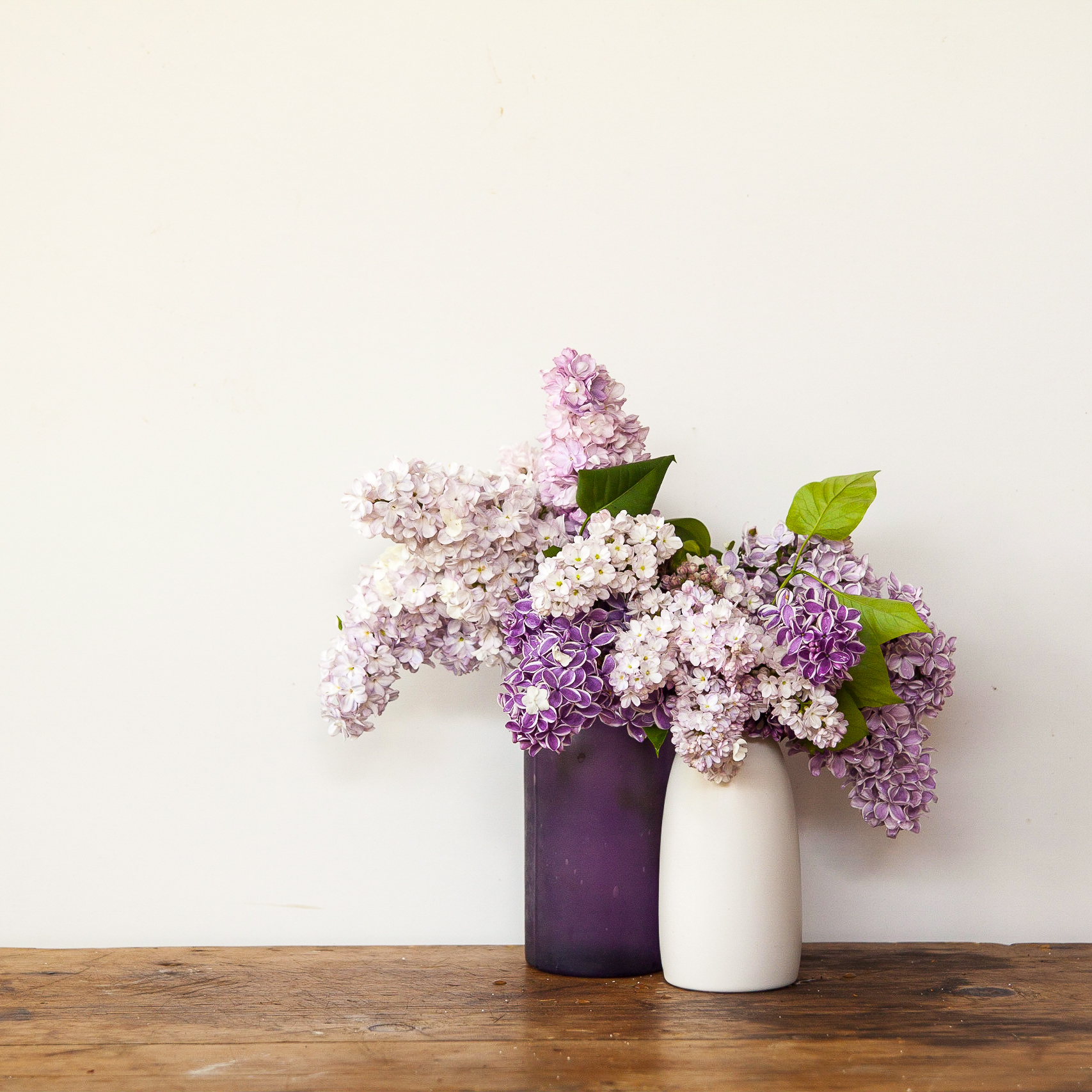 Lilac Dreams – a photo essay | Foraged and collected on flower love, flower reflection, flower business, flower scene, flower presentation, flower composition, flower poster, flower reference, flower description,