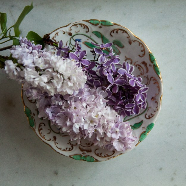 lilac for blog 6-1