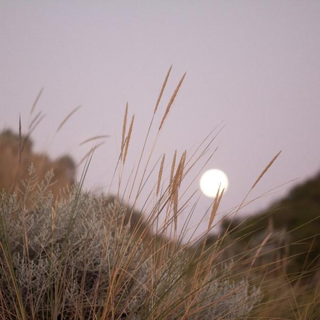 Week 4-52 grass moon-1