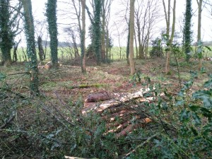 Thinning of woodland at Blithfield reservoir.