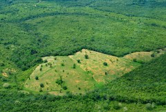 Quantifying the drivers of South American deforestation