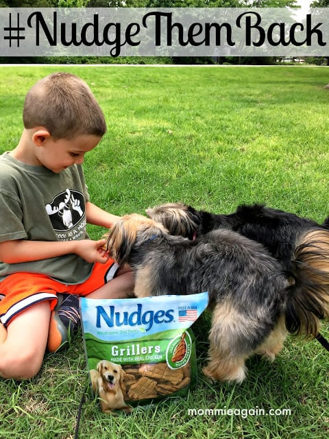Boy feeding two dogs Nudges Grillers Wholesome Dog Treats