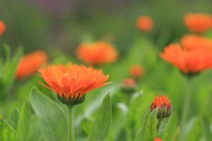 Faire fleurir en nous et entre nous les fleurs de la communication, de l'écoute, des besoins et de nos actes ainsi que les bourgeons de la réparation.