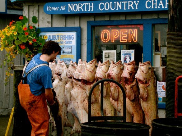 A Day's Catch in Homer