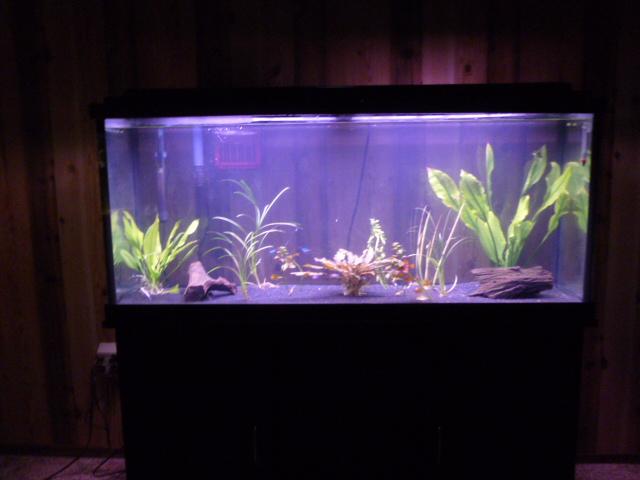 fish tanks for sale wichita ks 150 gallon fish tank
