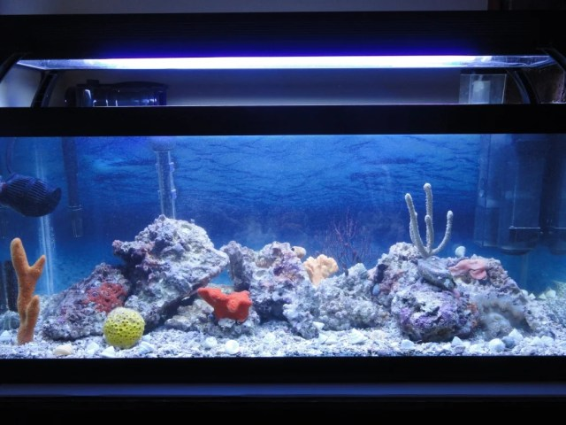 20 Gallon Long Reef Tank (NEW) | Page 2 | Saltwaterfish Forum