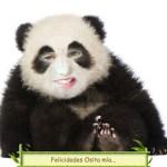 Fotomontaje de Oso Panda.