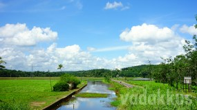 Green Fields and Blue Skies – The Typical Rural Kerala Setting