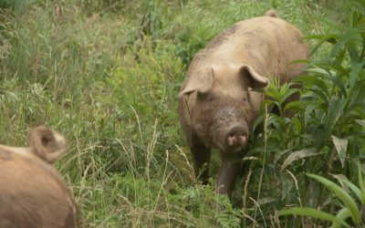 Fall Pork Reservations