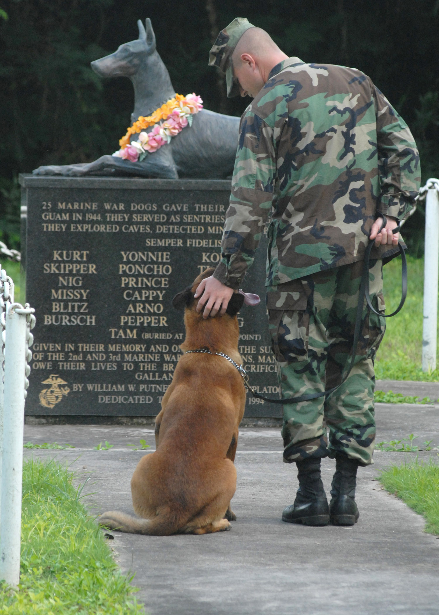 Fullsize Of What Is The Highest Military Rank Achieved By A Dog