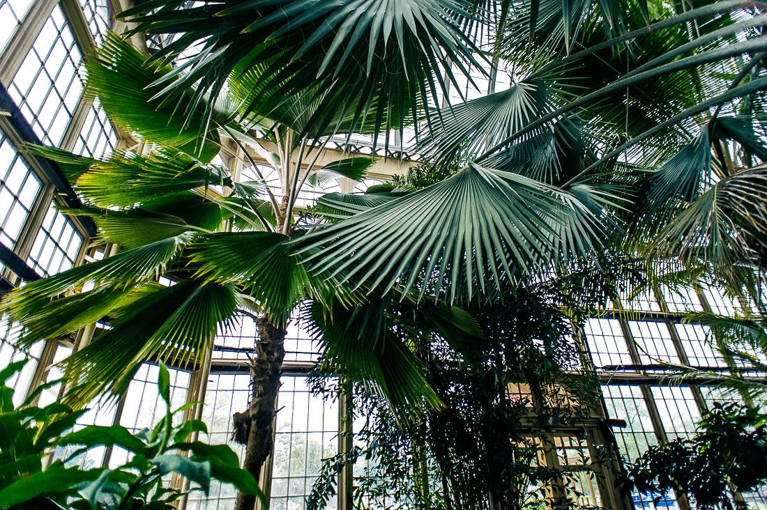 Rawlings-Conservatory-2